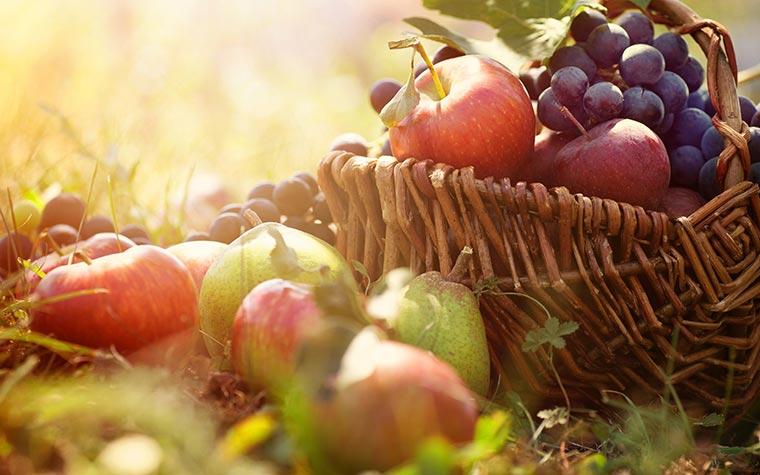autumn fruits armenia
