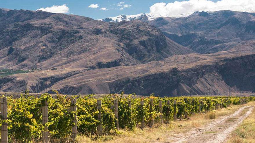 Armenia Wine Vineyards